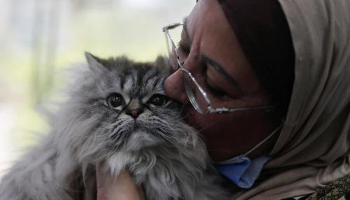 Don't Abandon us, we Don't Transmit Coronavirus, Say Cairo Dogs and Cats