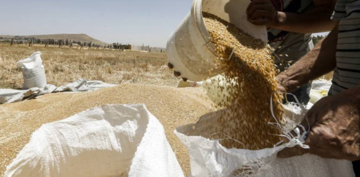 Syria Harvest Boom Brings Hope