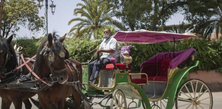 Morocco's Carriage Horses Suffer as COVID-19 Bars Tourists
