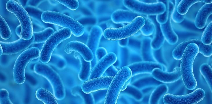 Scientists Develop Mathematical Index to Determine Healthy Gut Microbiome