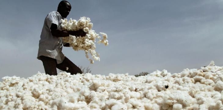 How the 'Success Story' of Genetically Modified Cotton in Burkina Faso Fell Apart