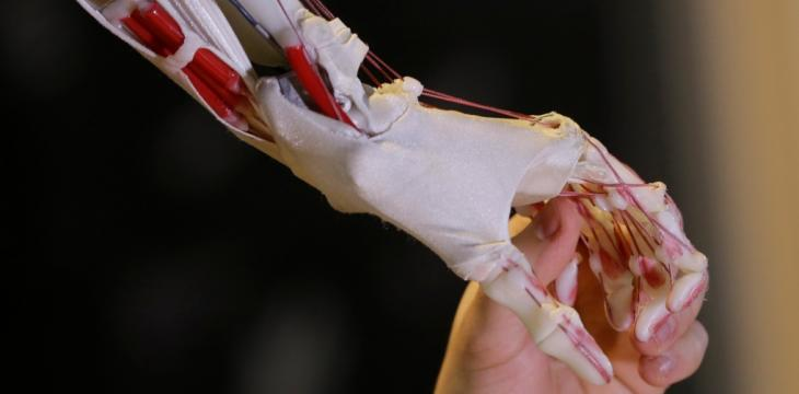 Researchers Develop New Robotic Arm Similar to Humans'