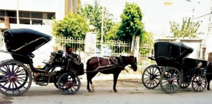 Horse-drawn Carriages Are Still Used For Transportation in Parts of Egypt