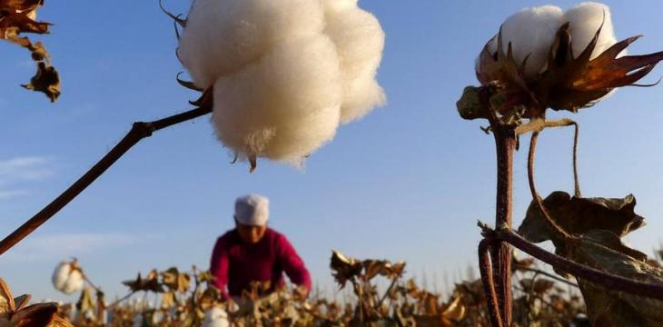 US Bans Imports of Xinjiang 'Slave Labor' Cotton