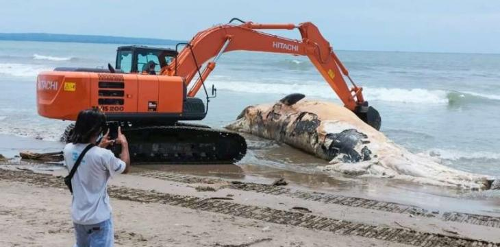 Whale Carcass Washes Up on Bali Beach