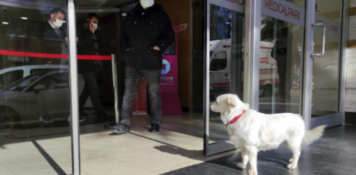 Turkey: Dog Spends Days Outside Hospital Waiting for Owner