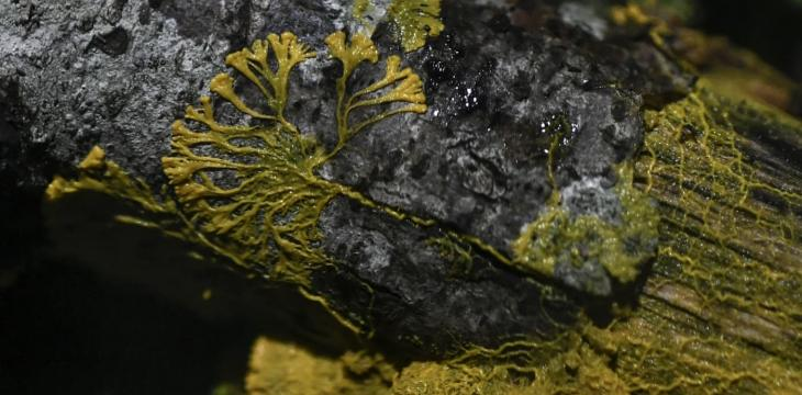 Slime Molds Can Remember Things Without a Brain