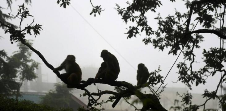 Men Who Used Monkeys to Steal Cash Arrested in India