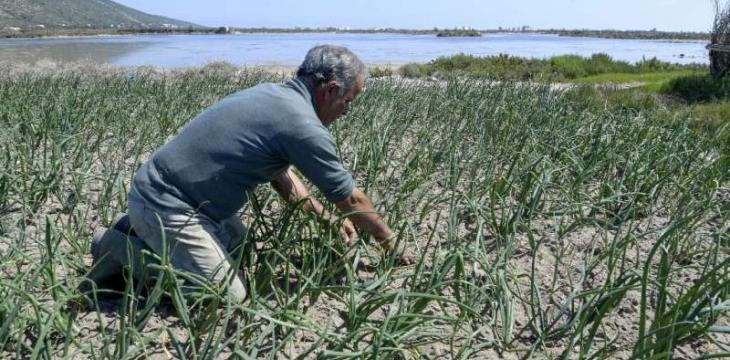Tunisia 'Sandy' Farms Resist Drought, Development