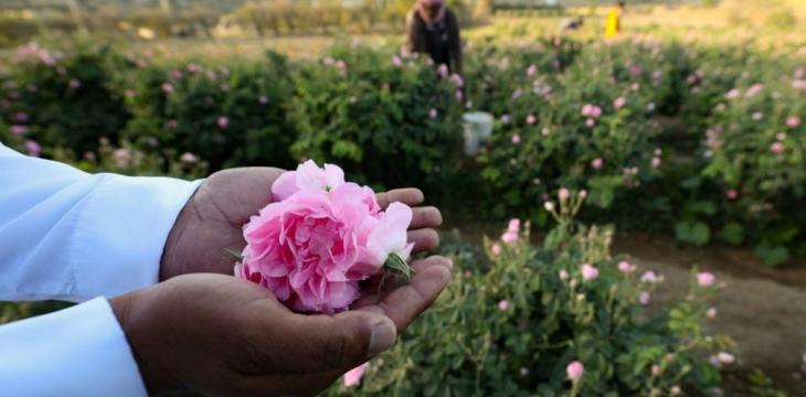 Saudi Arabia's Taif City of Roses Blooms in Ramadan
